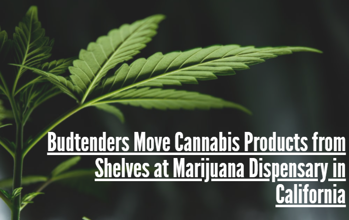 Budtenders Move Cannabis Products from Shelves at Marijuana Dispensary in California