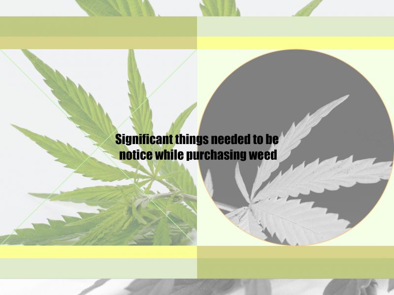 Significant things needed to be notice while purchasing weed
